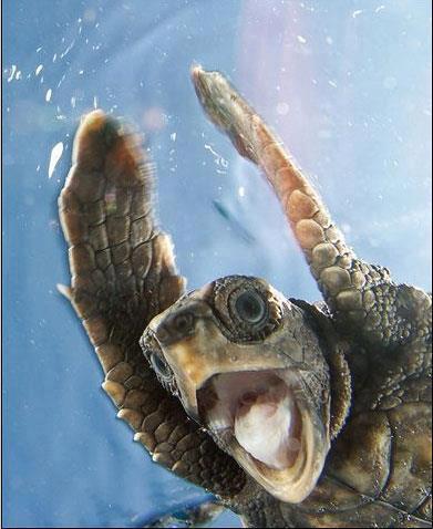 Everything!  Turtle