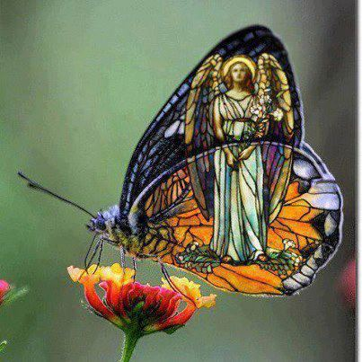 butterflyangel